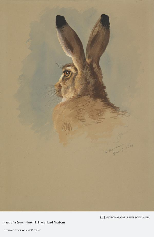 Archibald Thorburn, Head of a Brown Hare