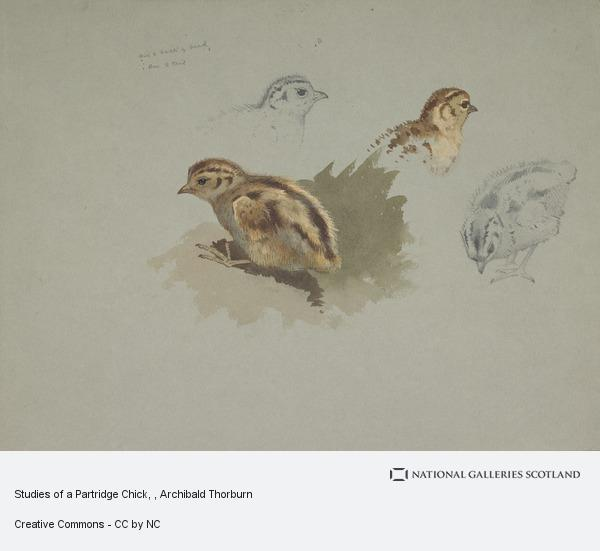 Archibald Thorburn, Studies of a Partridge Chick