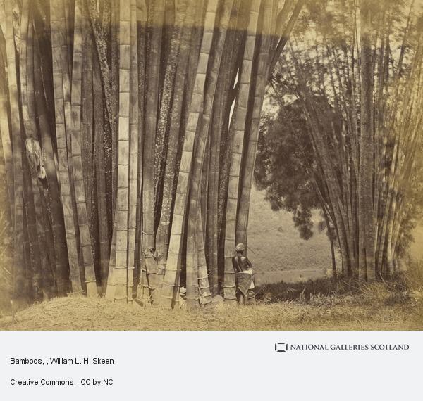 William L.H. Skeen, Bamboos