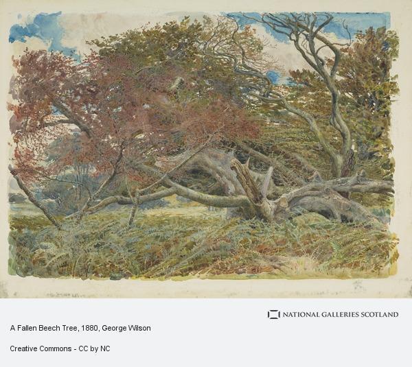 George Wilson, A Fallen Beech Tree