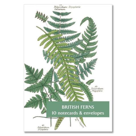 British ferns notecard set (10 cards)