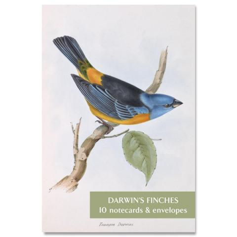 Darwin's Finches notecard set (10 cards)
