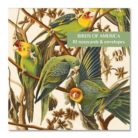 Birds of America by Audubon square notecard set (10 cards)