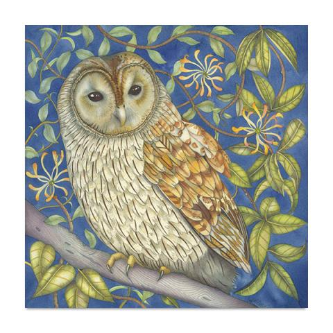 Tawny owl in the honeysuckle greeting card