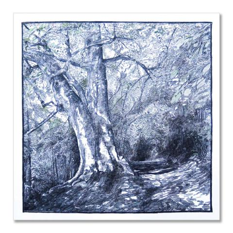 Ancient woodland by Hannah Longmuir greeting card