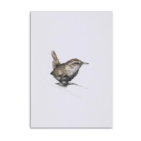 Wren greeting card by Hannah Longmuir