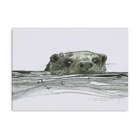 Otter greeting card by Hannah Longmuir