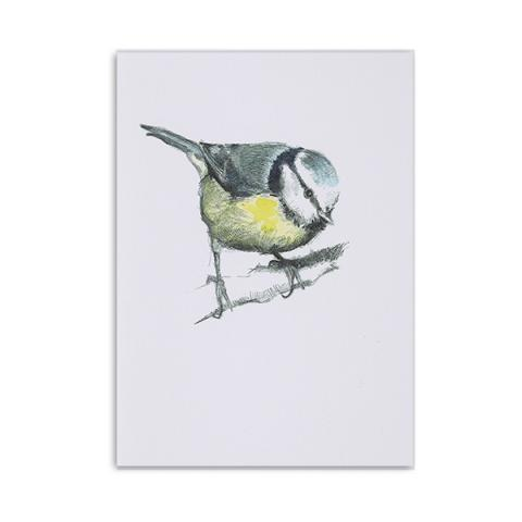 Blue tit greeting card by Hannah Longmuir