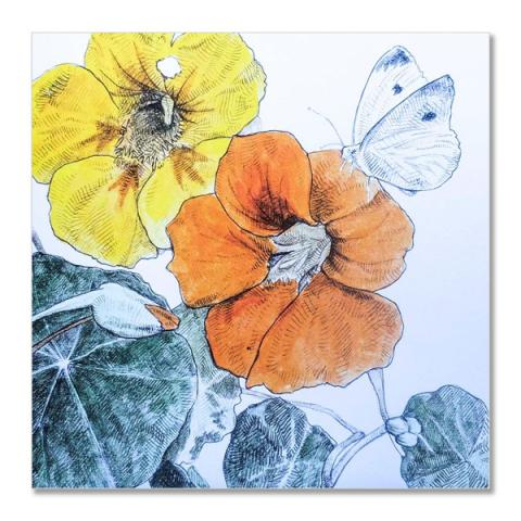 Nasturtiums greeting card by Hannah Longmuir
