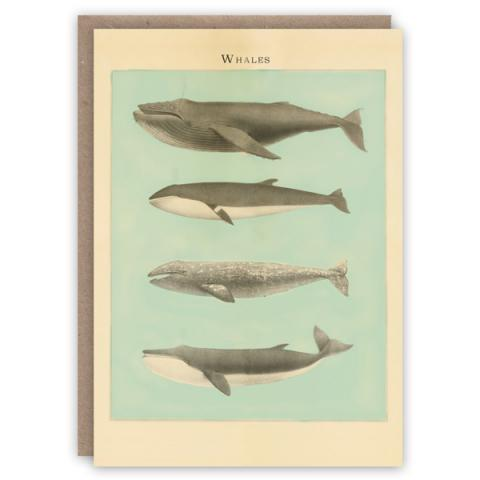 Whales pattern book greeting card