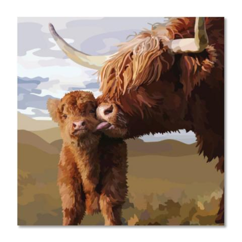 Highland cow and calf greeting card