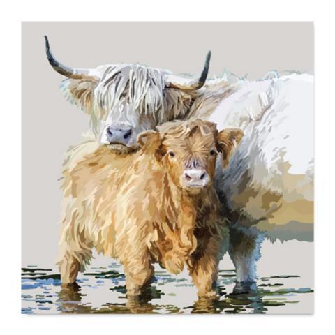 Highland calf greeting card