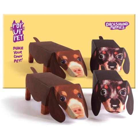 Dachshund puppies pop up pet