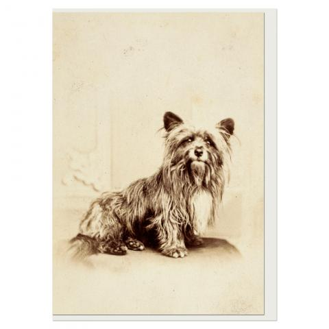 Greyfriars bobby greeting card