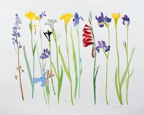 Wild Flowers Elizabeth Blackadder Limited Edition Screen Print
