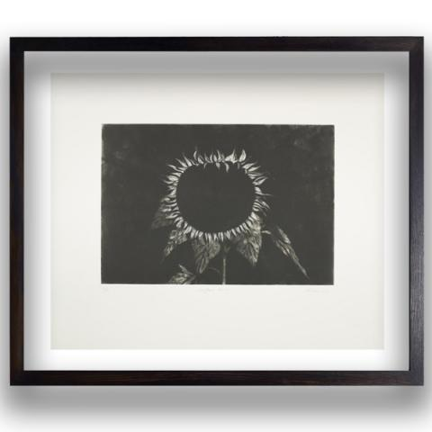 Sunflower Head Ken Currie Limited Edition Etching