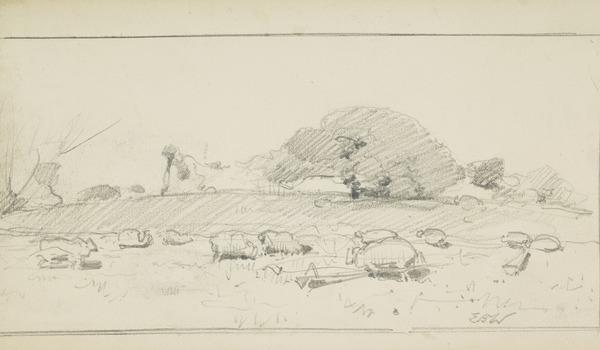 An Oak Tree Pasture with Sheep