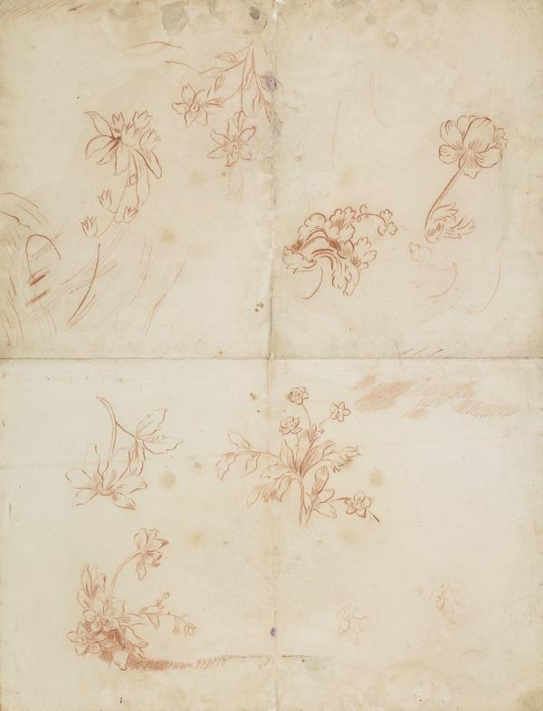 Decorative Drawing of Plants