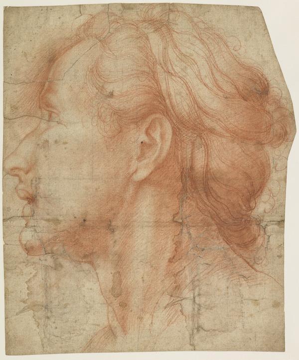 Female Profile Head