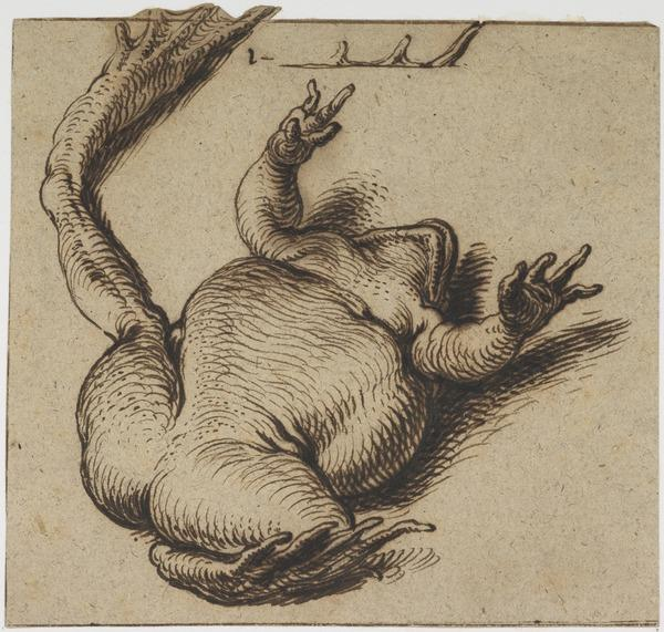 One of Two Frogs (About 1609)
