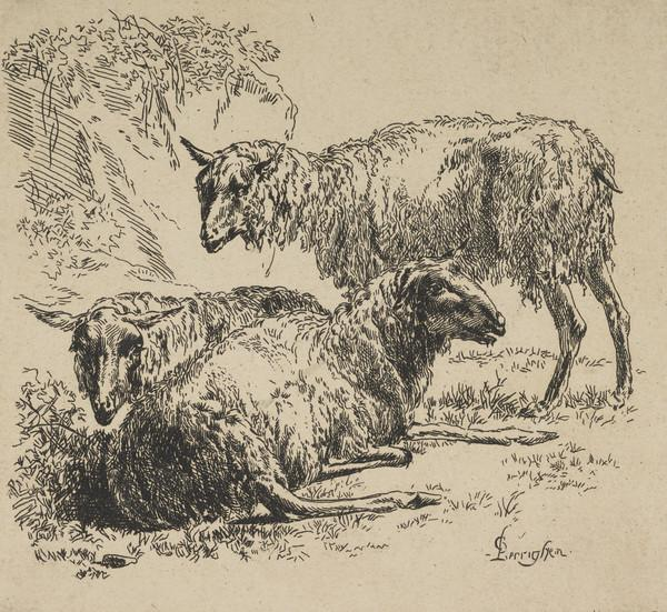 Three sheep. Two recumbent sheep to the left, one standing sheep in profile facing left to the right; from a series of eight plates showing sheep