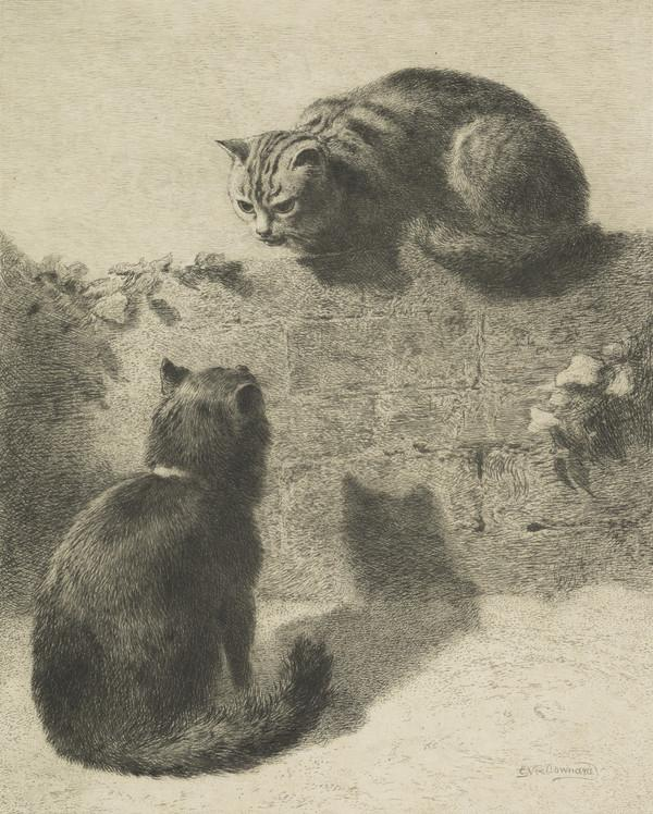 Romeo and Juliet - Study of Two Cats