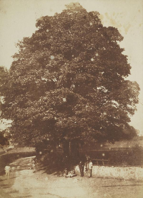 Road and trees in Roslin [Landscape 26] (1843 - 1847)