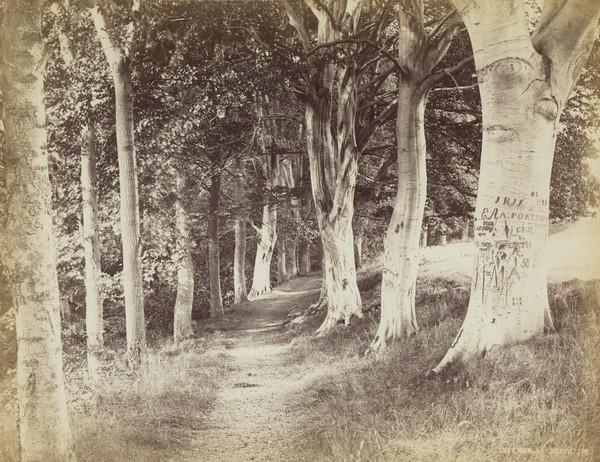 'Trees at Braid' (About 1864)