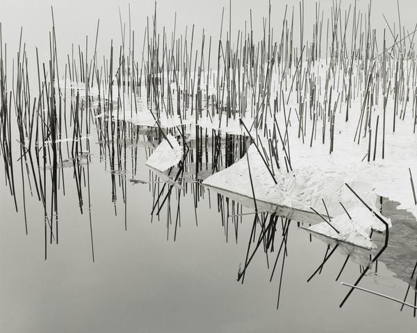 Ice on Reeds, Loch Ken, Dumfriesshire (1993)
