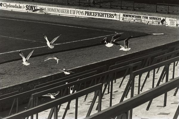 Love Street Football Ground, Paisley, Gulls flying over the Ground