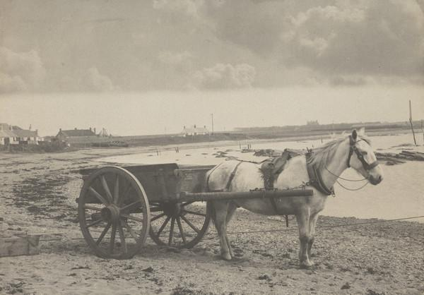 'West Haven'. Horse and cart on beach