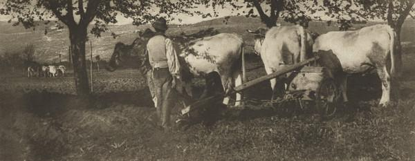 Lombardy Ploughing Team (1894)
