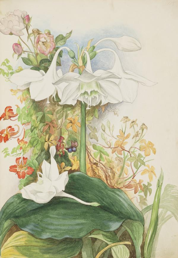 Eucharis lily, the first grown at St Mary's Isle, red tropaeolum, and the rose that grew on the south porch of the old house (Dated 1861)
