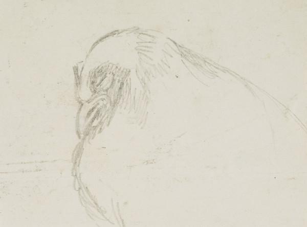 Study of a Roosting Bird