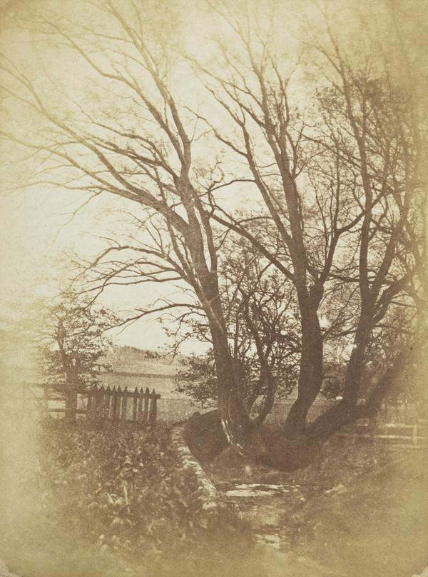 Tree and fence, perhaps at Colinton [Landscape 41]