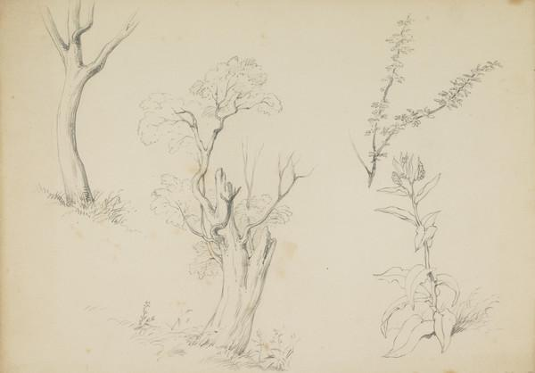 Studies of Trees and Plants