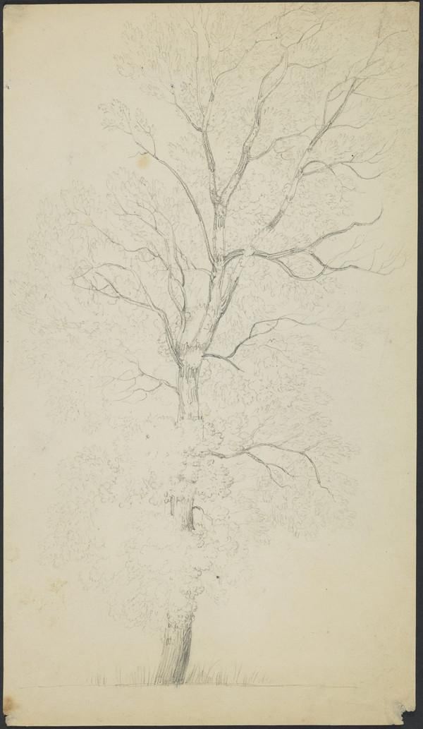 A Tree (About 1821)