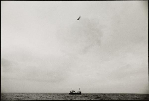 The Seine-netter 'Denebula', on the North Sea at Dawn (February 1993)