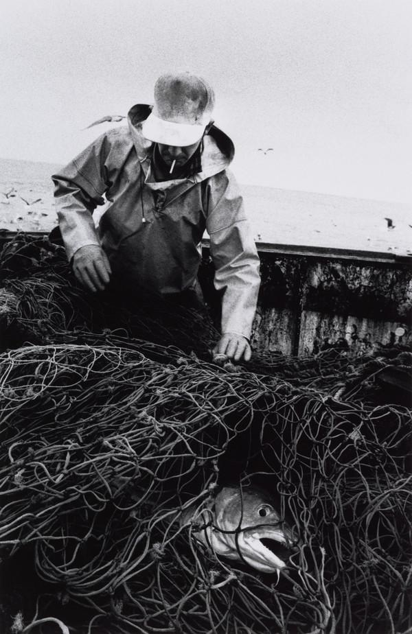 Stuart Kerr untangles a cod from the nets, aboard the 'Mairead', North Sea (1993)