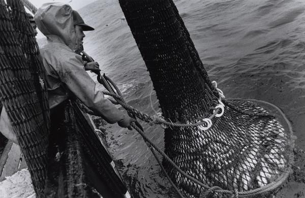 Thomas ('Tam') Gay hauls aboard the latest catch on the 'Mairead', North Sea (1993)