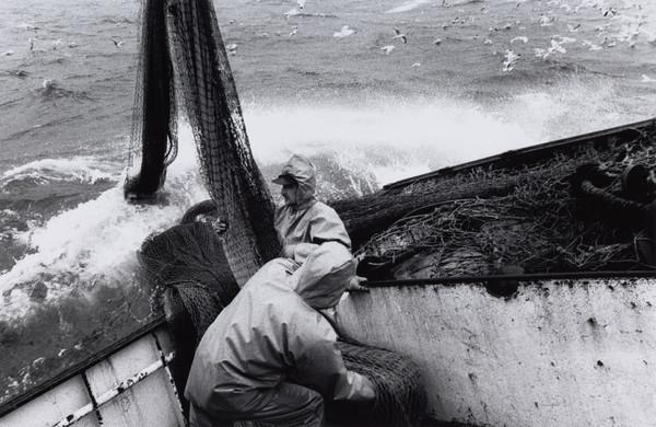 Tam Gay and Andrew Cooke haul aboard the nets, on the 'Mairead', North Sea (1993)