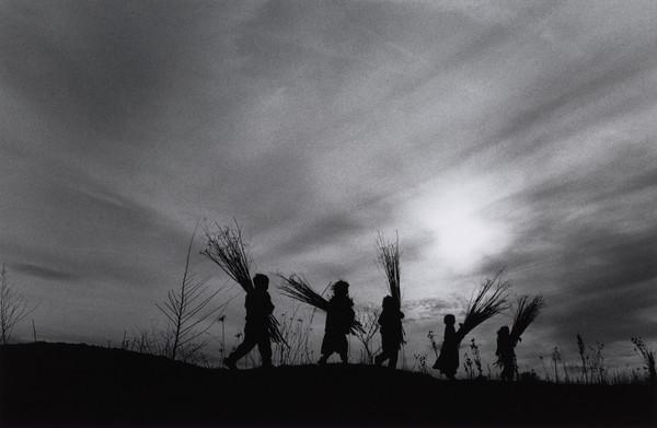 'Calderari gypsy children gather cones near Sintesti, Romania' (1993)