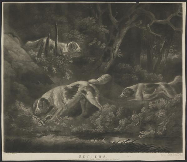 Setters (1806)