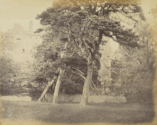 Trees at Craigmillar (About  1860s)