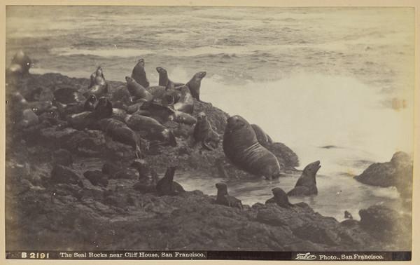The Seal Rocks near Cliff House, San Francisco, California