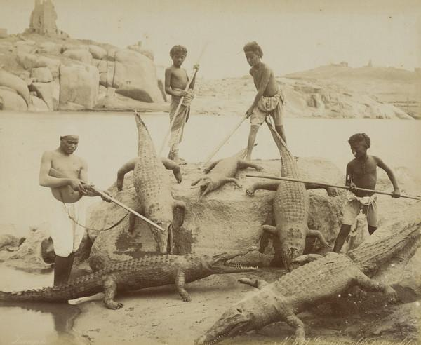 Egyptian ? Group with Crocodiles