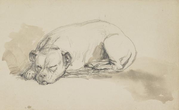A Dog Asleep