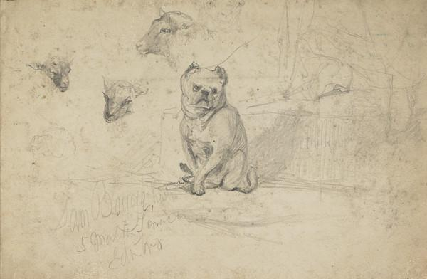 Sketch of a Dog and Heads of Sheep