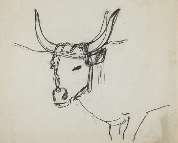 Long-horned Ox