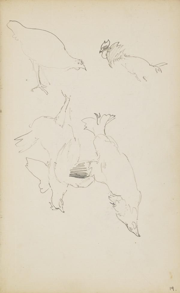 Sketches of Chickens (Verso: Similar Sketches) (About 1890s)